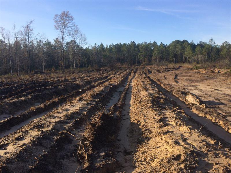 Carson Dickinson Tract : Citronelle : Washington County : Alabama