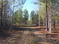 Reduced-232+- & 275+- Acres Wooded : Keysville : Burke County : Georgia