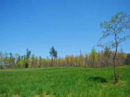34.95 Acre Estate Home Site : Campobello : Spartanburg County : South Carolina