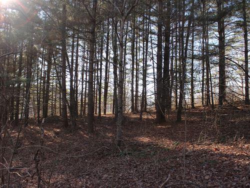 Brooks Martin Rd - 15 Acres : Mc Arthur : Vinton County : Ohio