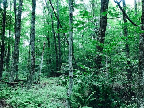Surrounded By State Forests : Annsville : Oneida County : New York
