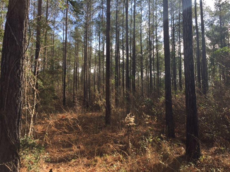 County Road 306 Tract : Elba : Coffee County : Alabama