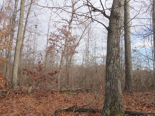 8th St Rd - 70 Acres : Kimbolton : Guernsey County : Ohio