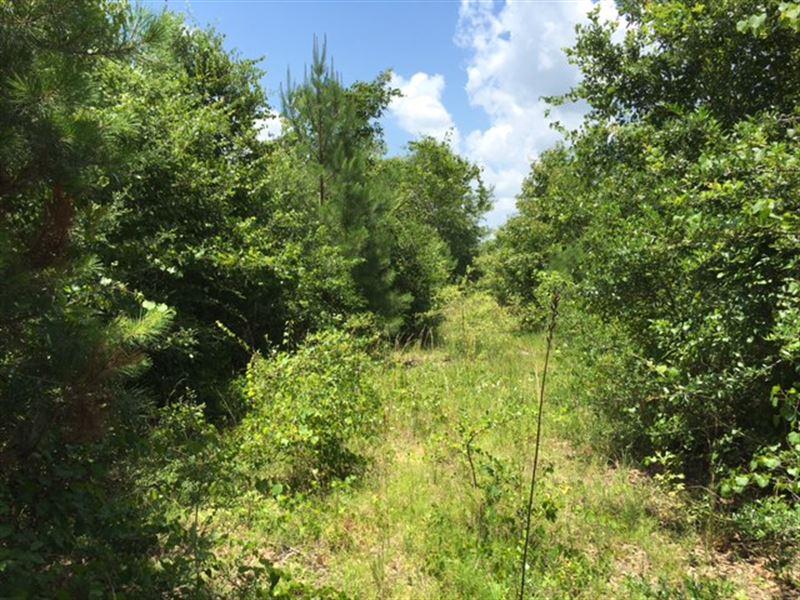 200 Acres Recreational : Lumberton : Stone County : Mississippi