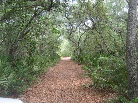 Greenway Retreat - 194 Acres : Salt Springs : Marion County : Florida