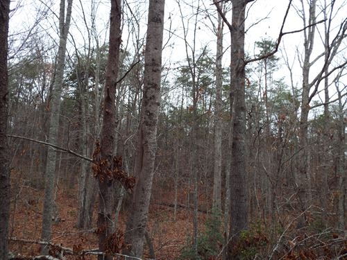 Cumberland County Acreage In Mecca : Crossville : Cumberland County : Tennessee
