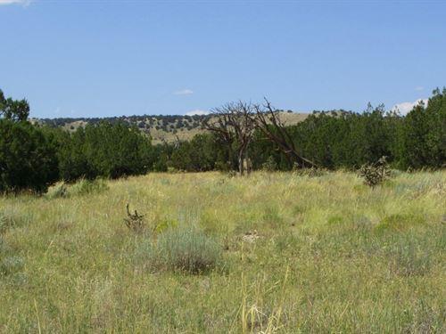 80 Acre Baby Mesa Lot Look West : Model : Las Animas County : Colorado