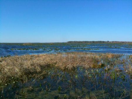 Orange Lake - 84 Acres Waterfront : Citra : Marion County : Florida