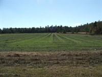 Exceptional Farm Near Elko Sc : Elko : Barnwell County : South Carolina