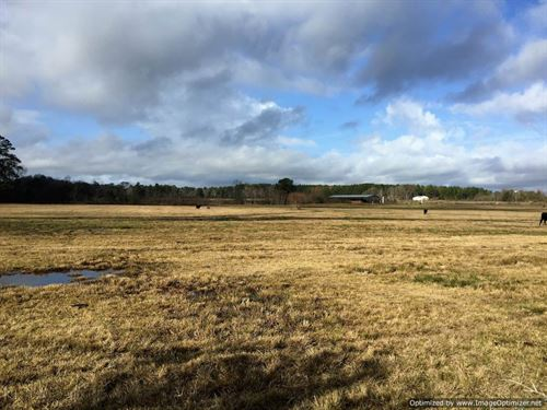 99 +/- Ac Turn-Key Cattle Property : Shubuta : Clarke County : Mississippi