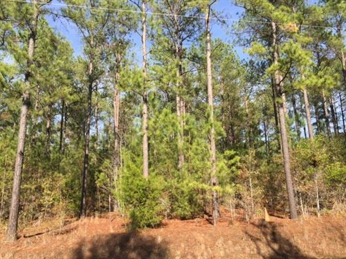 Beautiful Tract With Mature Pine : Dawson : Terrell County : Georgia