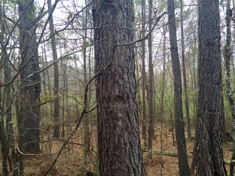 Farm With Hunting And Timber : Fort Valley : Peach County : Georgia