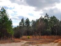 Double Creek Forest : Lexington : Oglethorpe County : Georgia