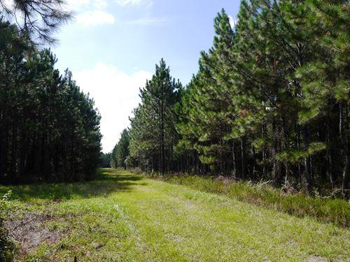 The Outdoorsman's Envy : Starke : Bradford County : Florida