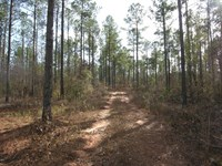 212 Acres Planted Pines : Blythe : Burke County : Georgia