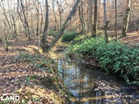 Hardwoods And Creeks Near Tugaloo : Westminster : Oconee County : South Carolina
