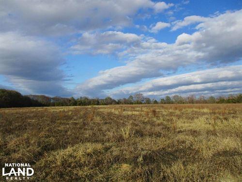 26 Acres Clay County Farmland : Fort Gaines : Clay County : Georgia