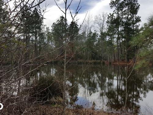 Raven Hill Road Homesite/Recreation : Huntsville : San Jacinto County : Texas