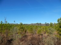 Timber Investment / Hunting : Warrenton : Warren County : Georgia