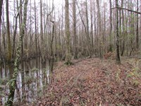Jacks Creek Tract : Rimini : Clarendon County : South Carolina