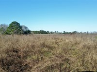 70 Acres Development Land : Clermont : Lake County : Florida
