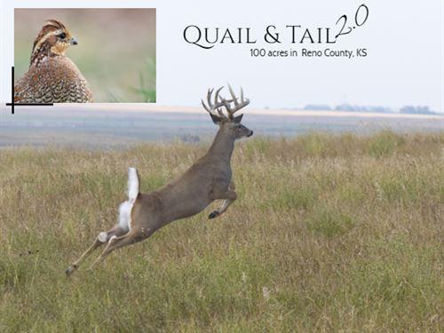 Quail & Tail 2.0 : Haven : Reno County : Kansas