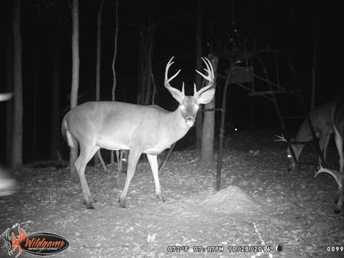 All New Hunting Camp, Great Area : Fort Davis : Macon County : Alabama