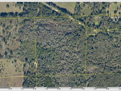 36.45 Acres - Wonderful For Hunting : Fort White : Columbia County : Florida