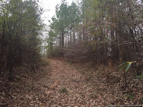38 Ac Adjoins Nat'l Forest : Roxie : Franklin County : Mississippi