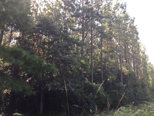 Hunting Development Land Hattiesbur : Hattiesburg : Forrest County : Mississippi