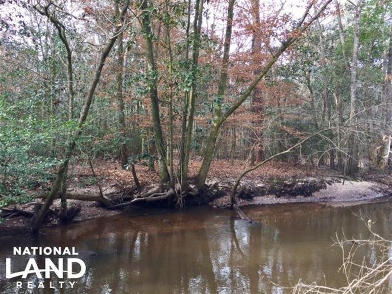 Carter Creek Hunting Tract : Cuthbert : Randolph County : Georgia