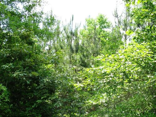 Vizard Plantation Parcel B : Kinder : Allen Parish : Louisiana