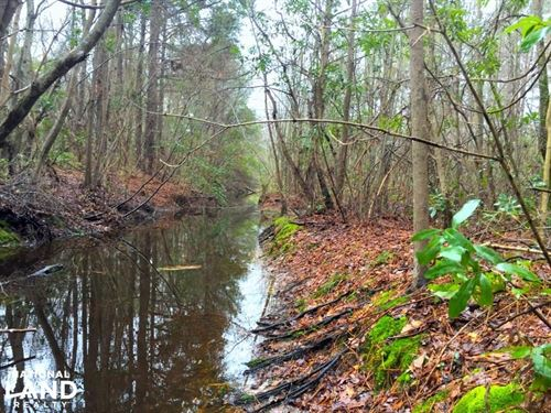 Jacks Branch Recreational Tract : Timmonsville : Darlington County : South Carolina