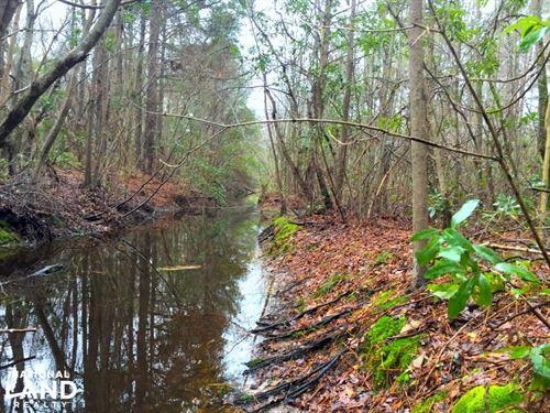 Jacks Branch Recreational Tract : Timmonsville : Darlington County : South Carolina