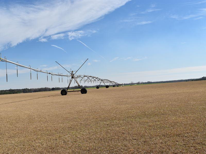 Beautiful Irrigated Farm : Lakeland : Lanier County : Georgia