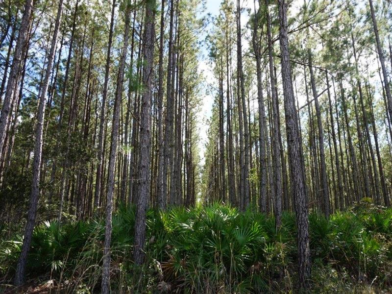 Jones Tract Timberland Investment : Interlachen : Putnam County : Florida