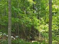 37 Acres Near Blythewood - Privacy : Blythewood : Richland County : South Carolina