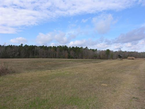 291 Acres Open, Wooded, Cabin : Midville : Burke County : Georgia