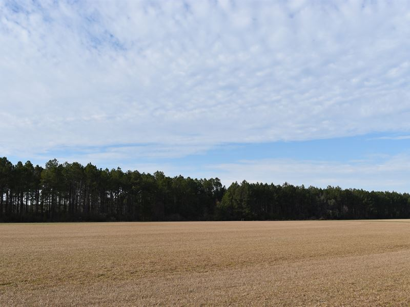 Irrigated Crop Land And Timber : Lakeland : Lanier County : Georgia