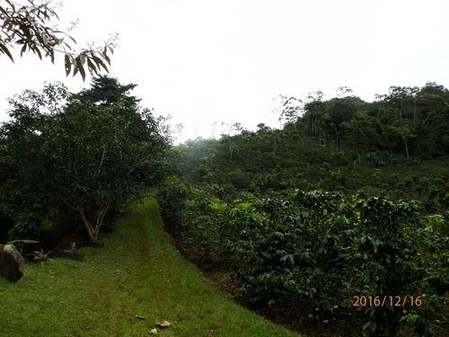 39 Acre Coffee And Tree Farm, River : Tuis De Turrialba : Costa Rica