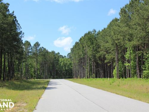 Wadboo Plantation Large Acreage Lot : Bonneau : Berkeley County : South Carolina