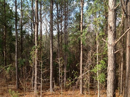 179 Acres Of Timberland : Thorsby : Chilton County : Alabama