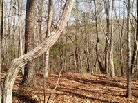Mackenzie Lane - 32.24 Acres : Marble Hill : Pickens County : Georgia