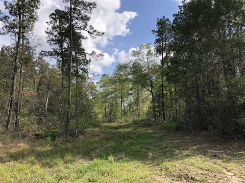 66 Acres Off Fm 62 : Camden : Polk County : Texas
