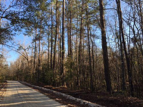 Black Swamp Tract : Mullins : Marion County : South Carolina