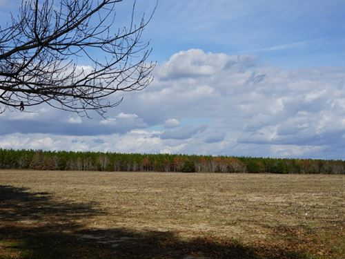 Buckhorn Farms : Marshallville : Macon County : Georgia