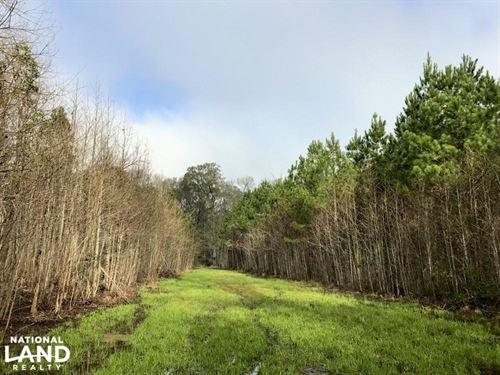 Pineland Small Hunting Tract : Pineland : Jasper County : South Carolina