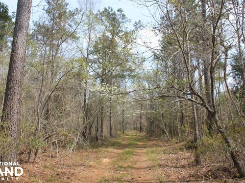 Bonneau 5 Acres : Bonneau : Berkeley County : South Carolina