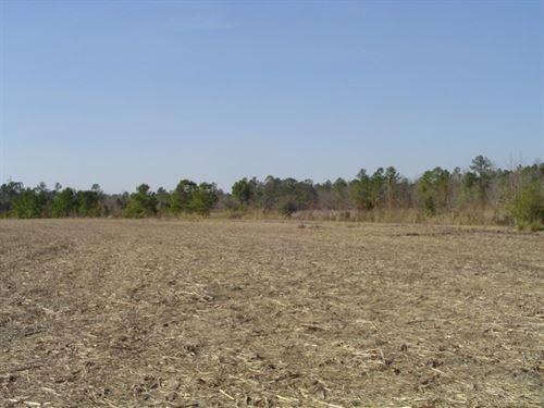 Stanley Tract : Walterboro : Colleton County : South Carolina