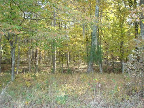 Benton Tract - Macon Co 264 Acres : Shorter : Macon County : Alabama